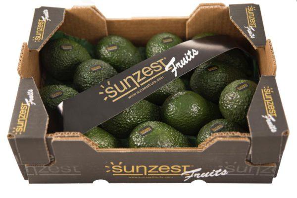 hass-avocados-sunzestfruits-2